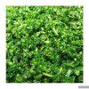 سبزی کوکو خرد شده آماده مصرف در بسته 5 کیلوگرمی01