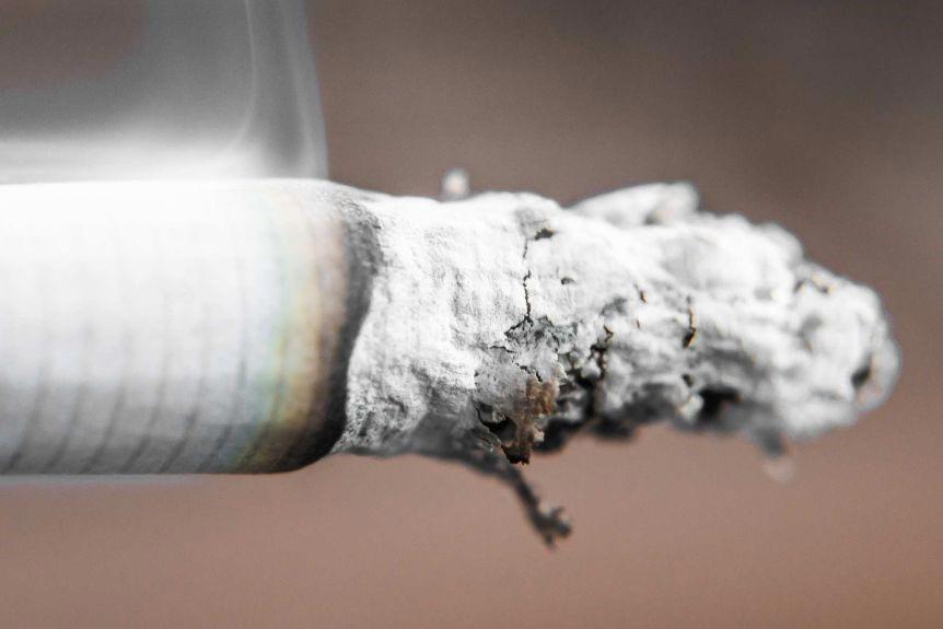 سیگار سناتور دوسیب در بسته 10 عددی