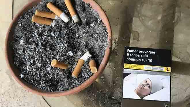 سیگار سناتور آلبالو در بسته 10 عددی