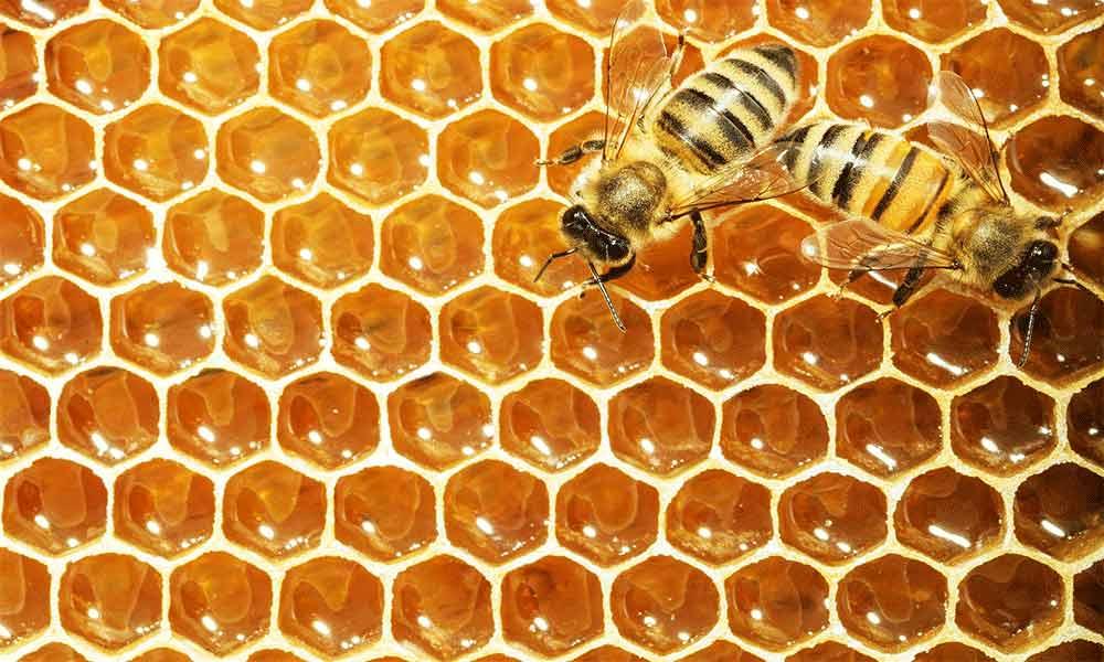 عسل تکنفره 20 گرمی کشت چین در کارتن 75 عددی