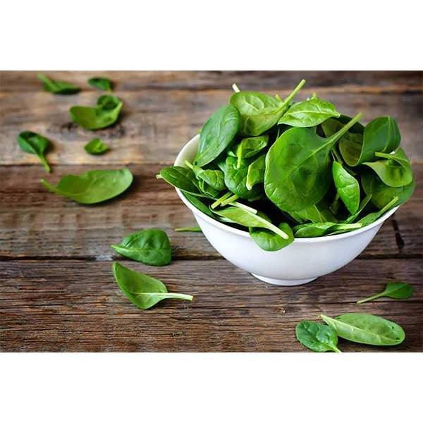 سبزی اسفناج خرد شده آماده مصرف در بسته 10 کیلوگرمی