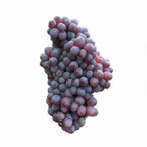 عکس شاخص،انگور یاقوتی در سبد 10 کیلوگرمی