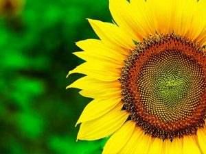 روغن آفتابگردان D3 2 لیتری طبیعت در کارتن 6 عددی